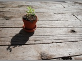 what basil, cilantro and parsley taught me about relationships. (guestpost)